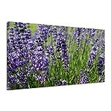 Lavendelpflanze Kraut Aromatherapie Medizin Leinwand Poster Bild Druck aa1513 80x60