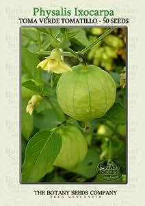 Physalis Ixocarpa 'Toma Verde' (50) Graines - Tomatillo 'Toma Verde' Semences [Tomatillo 'Toma Verde']