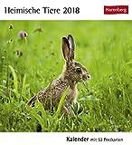 Heimische Tiere - Kalender 2018: Kalender mit 53 Postkarten
