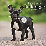 Französische Bulldogge 2020: Broschürenkalender mit Ferienterminen. Hunde-Kalender. 30 x 30 cm
