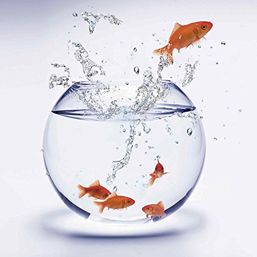 Artland Qualitätsbilder I Glasbilder Deko Glas Bilder 50 x 50 cm Tiere Wassertiere Fisch Foto Weiß A6MF Goldfischaquarium