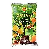 COMPO SANA Zitruspflanzenerde mit 8 Wochen