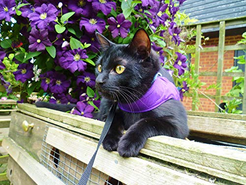 Mynwood Cat Jacket/Harness Purple Adult Cat - Escape Proof