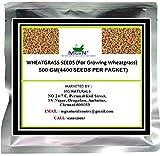 #2: WHEATGRASS SEEDS (For Growing Wheatgrass) 500 GM (2200 Seeds Per Packet)