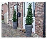 Paar 120cm 4ft Beste Künstliche Cedar Pine Cypress-Konifere