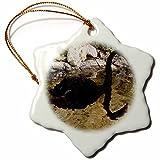 3dRose orn_35427_1 Black Swan Mirrored Snowflake Porcelain Ornament, 3-Inch