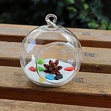Hanging Glass Flower Vase Bottle Hydroponic Terrarium Container Decor 8cm-20cm