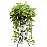 Flower Pot Stand Plant Stand Flower Rack Stand Flower Pot Display Stand-European Wrought Iron Floor-standing Living Room Flower Stand LEBAO