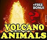 Deep Sea Volcano Burning Water Animals (English Edition)