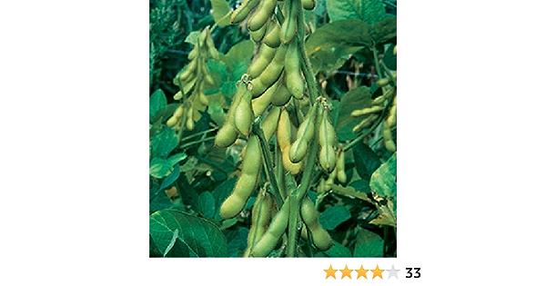 Edamame Seeds /Ökosaatgut Gem/üse Saatgut im Garten Sojabohne Samen,Butterbohnen Samen