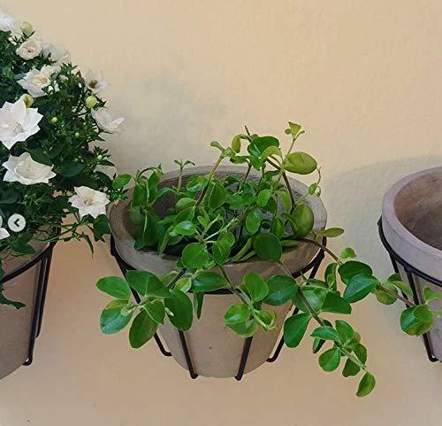 Unbekannt   Blumentopfhalter Wand Metall Schwarz H 13 cm B 17 cm Wandhalter mit Ton-Topf für Blumen   Topfhalter Windlichthalter Wanddeko Landhaus Sommer Herbst