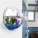 Sotoboo appeso a parete Fish Tank–fioriera Plant erba acrilico vasi per fiori da appendere Fish Tank Bowl mini acquario decorazione della casa ufficio decorazione, vetro trasparente