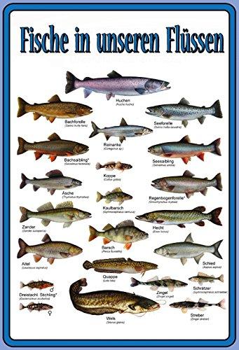 (Fische in unsere Flüssen übersicht metal sign deko schild blech projekt)