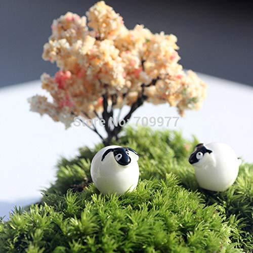 ShopMeeko Seeds: Hochwertige ursprngliche Ökologie Hanging Planter Vase Topf und Bonsai Moose Pflanze Landschaftsbau Pflanzen