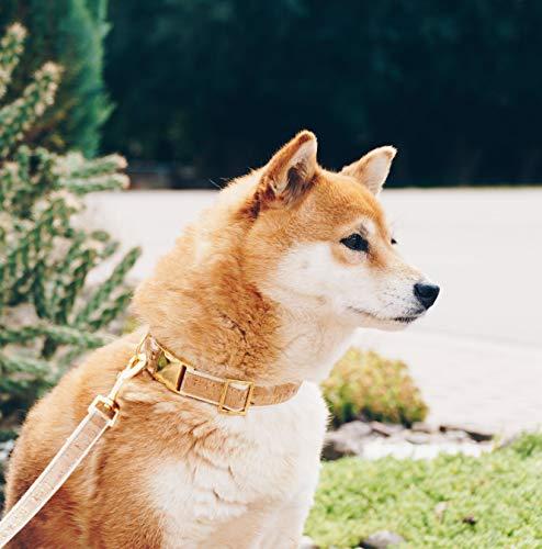 4 Nooks - Veganes Design Hundehalsband aus Baumwolle und Kork mit Gold, Größe S - 4