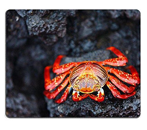 luxlady Gaming Mousepad Bild-ID: 32083419Sally Lightfoot Crab auf einem schwarzen Lava Rock - Sally Lightfoot Crab