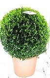Buchsbaum Kugel, Durchmesser: 40 cm, Buxus sempervirens