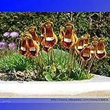 GEOPONICS Calceolaria Uniflora Semi rari, Professional Service Pack, 30 semi/Pack, della signora Purse pantofole # NF947
