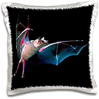 Danita Delimont - Bats - Sanborns Long-nosed Bat, Arizona - NA02 DNO0395 - David Northcott - 16x16 inch Pillow Case (pc_83936_1)