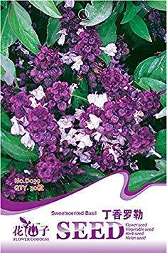 Pinkdose® 2018 heißer Verkauf duftenden Demure Thai Basilikum mit einem Lakritze Akzent Herb Samen, Original Pack, 30 Samen/Pack, organische berauschende Basilikum D039 - Original Lakritz