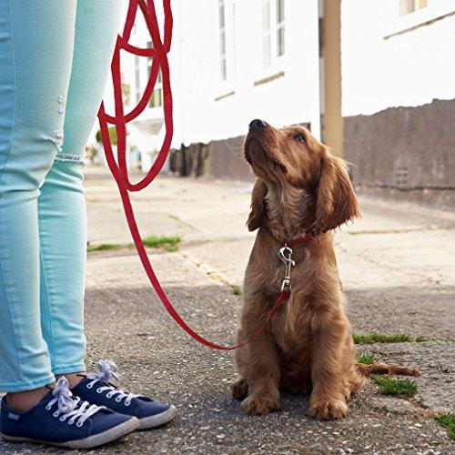 Perro plomo cuerda, tyhbelle perro formación correa segunda mano  Se entrega en toda España