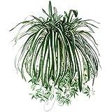 Sunlight House 1PC Chlorophytum Comosum finta verde pianta artificiale pianta ragno per casa hotel decorazione da parete per interni Outdside cestino pensile