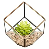 Sotoboo Moderne Terrarium Glas Klar Pyramid Tabletop Geometrische Polyeder Box, Deko Sukkulenten Halter Farn Moos Blumentopf Box, Geschenk, Farblos, B