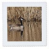 3dRose qs_93941_1 OR, Baskett Slough NWR, Kanada Goose