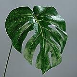 6x Philodendron Baumfreund Blatt Wedel Kunstpflanze...