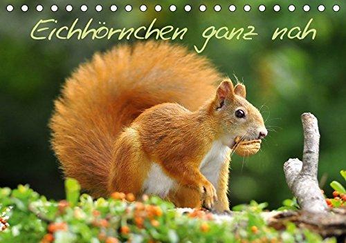 Eichhörnchen ganz nah (Tischkalender 2018 DIN A5 quer): Kleine Nager auf Futtersuche (Monatskalender, 14 Seiten ) (CALVENDO Tiere) [Kalender] [Apr 01, 2017] Jazbinszky, Ivan