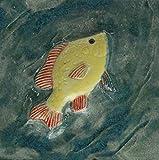 Echtes Kunsthandwerk: Tolle Relief Fliese Fisch; Bad, Badezimmer, Grasfrosch, Tier, Tiere, Kunst, Kachel, Fliesenbild, Bild