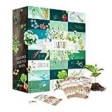 Saatgut Adventskalender mit 24 außergewöhnlichen Sorten Gemüse Salat Kräutern Säen im Garten oder Topf Kalender als Geschenk für Frauen Weihnachtskalender für Mütter