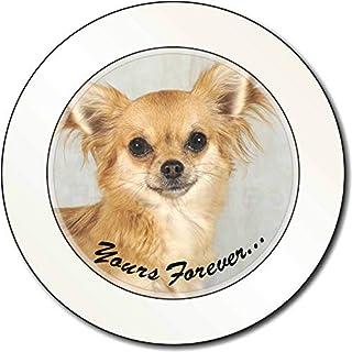 Brown Chihuahua \