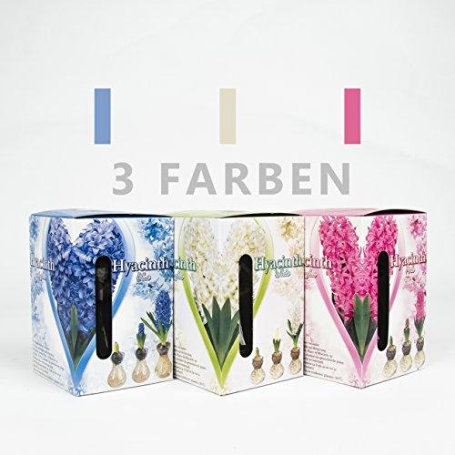 Interflowers GmbH