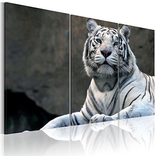 FORMATO GRANDE + Impresion en calidad fotografica + 3 partes + Animales + cuadro 030216-1 + 120x80 cm +++ GRAN VARIEDAD DE CUADROS Y IMPRESOS ARTÍSTICOS EN NUESTRA TIENDA VIRTUAL +++