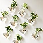 Confezione da 2vasi-contenitore decorativi da parete in vetro per terrario