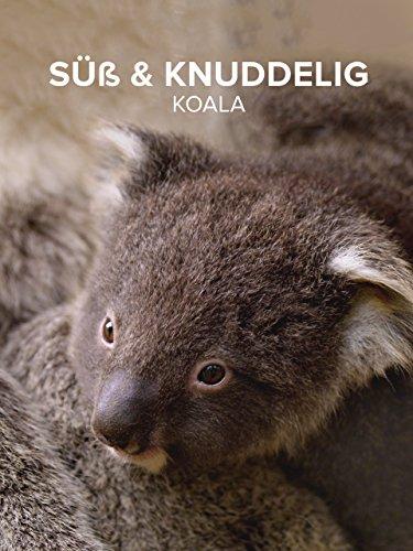 Süß & Knuddelig Koala