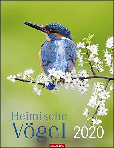 Heimische Vögel 2020 30x39cm