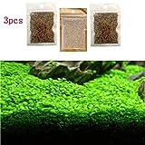 Handfly Samen vong Lücklich Wasserpflanzen-Fischbehälter Zierpflanzen Samen Aussichten Mini Blatt