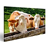 islandburner Bild Bilder auf Leinwand Kühe in den europäischen Alpen - Foto Wandbild, Poster, Leinwandbild OEP