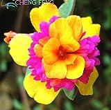 2015 heiße Verkaufs-Bonsai Blumensamen Sonnenblumensamen Portulakröschen Portulak 200 Pfingstrose Spargel