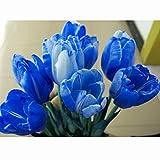 Semi di Tulipano, Fuanxi Tulipani Fiore Semi di Bonsai Giardino di Casa Balcone Pianta in Vaso Bonsai,1PZ,Blu