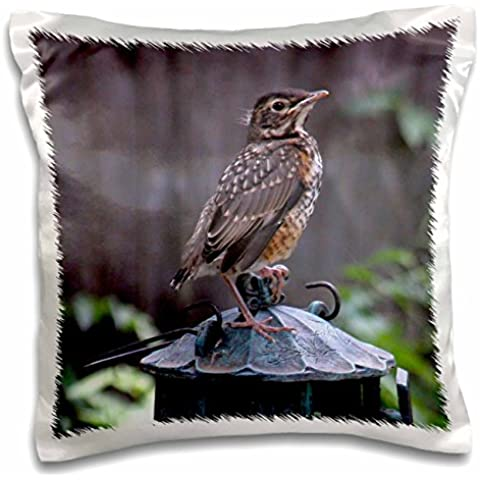Beverly Turner Bird Photography - Baby Robin on a Feeders - 16x16 inch Pillow Case (pc_32936_1) - Robin Feeder