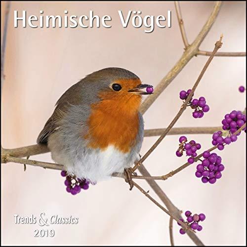 Heimische Vögel 2019 Trends & Classics Kalender
