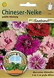 Chineser Nelke gefüllte Mischung Saatband für Balkon & Terrasse überreicher Blütenflor 4-5 cm große Blüten 53020