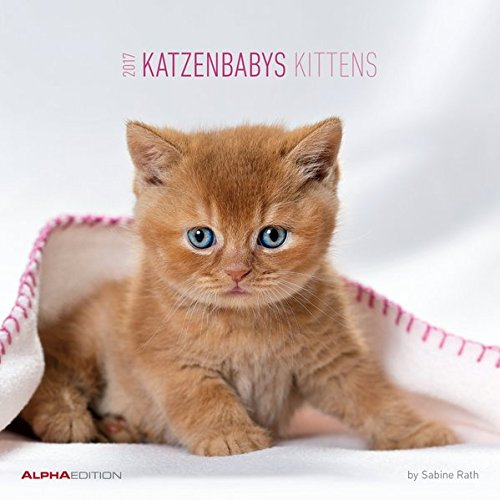 katzenbabys-2017-broschurenkalender-kittens-by-sabine-rath