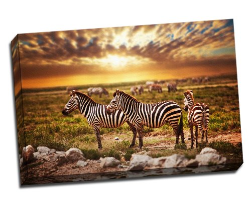 Zebras Herd on African Savanna at Sunset. Safari in Serengeti poster stampa artistica su tela 76,2x 50,8cm pollici