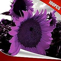 Austinstore 100Pcs Rare Purple Sunflower Seeds Beautiful Flower Home Garden Plant