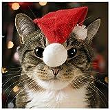 Me to You Up Close 3D Tabby gatto con cappello di Babbo Natale cartolina di auguri