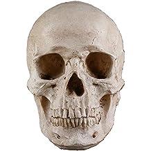 BEETEST Miedo vida réplica niños humanos cráneo cabeza Halloween fiesta casera tamaño escritorio decoración accesorios adorno modelo Decor